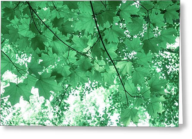 Dreams Of Summer In Paolo Veronese Green Greeting Card