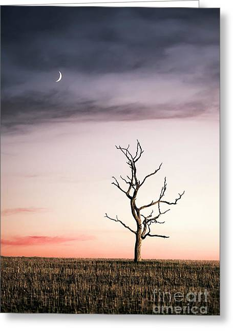 Dreams Of The Dead Tree Greeting Card