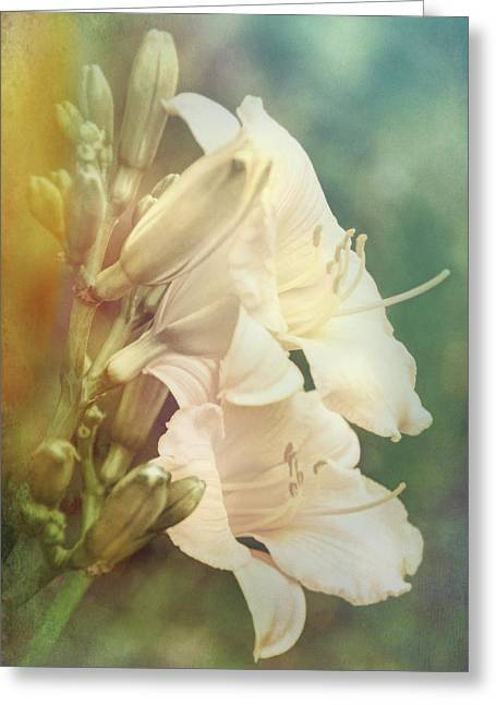 Greeting Card featuring the photograph Dreamy Lilies by Leda Robertson