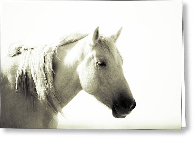 Dreamy Mare Greeting Card