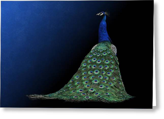 Greeting Card featuring the photograph Dressed To Party - Male Peacock by Debi Dalio
