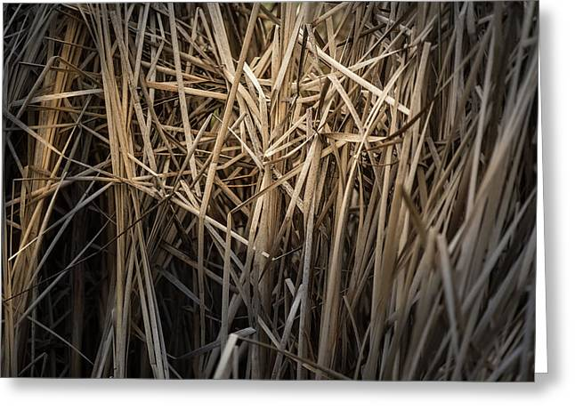 Dried Wild Grass II Greeting Card