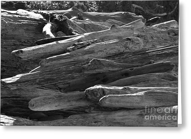 Greeting Card featuring the photograph Drifted Wood by Jeni Gray