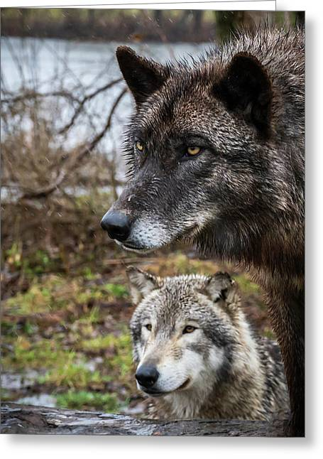 Dual Wolves Greeting Card