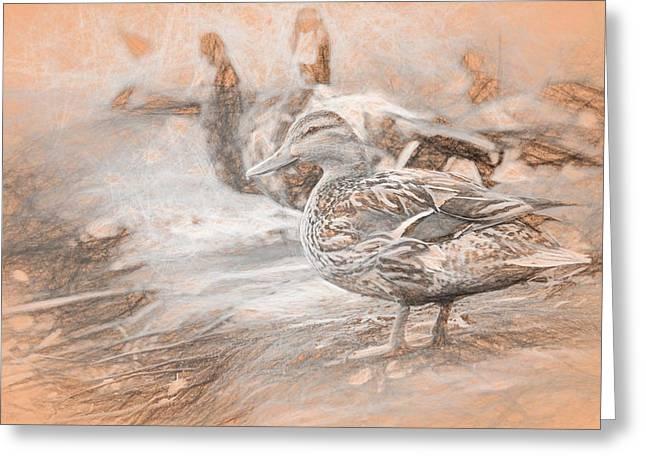 Ducks On Shore Da Vinci Greeting Card