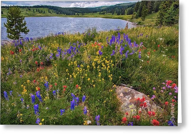 Dumont Lake Colorful Flowers Greeting Card