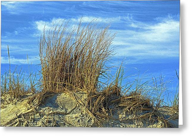 Greeting Card featuring the photograph Dune Grass In The Sky by Bill Swartwout Fine Art Photography