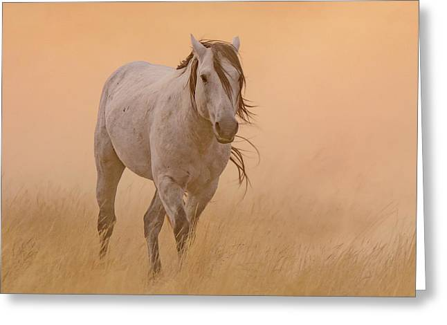 Dusty Evening Greeting Card