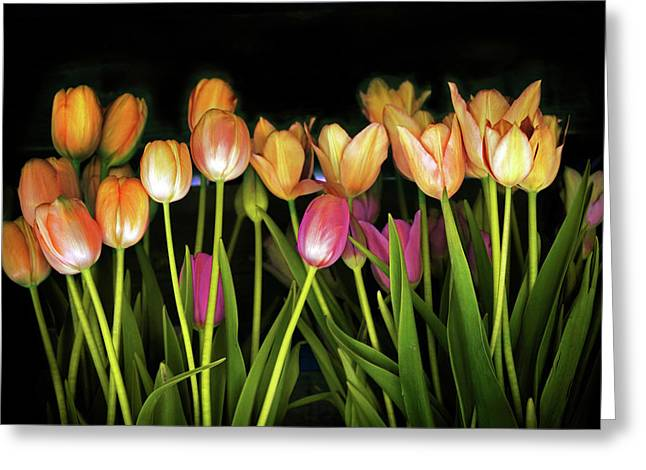 Tulip Collection  Greeting Card