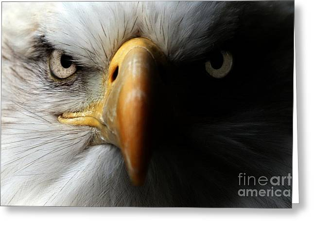 Eagle Close Up Portrait Greeting Card