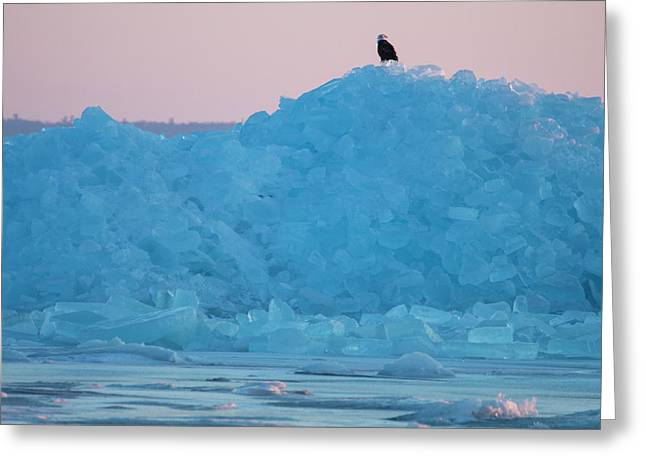 Greeting Card featuring the photograph Eagle On Ice Mackinaw City 2261803 by Rick Veldman