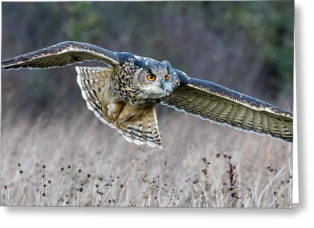 Eagle Owl Gliding Greeting Card