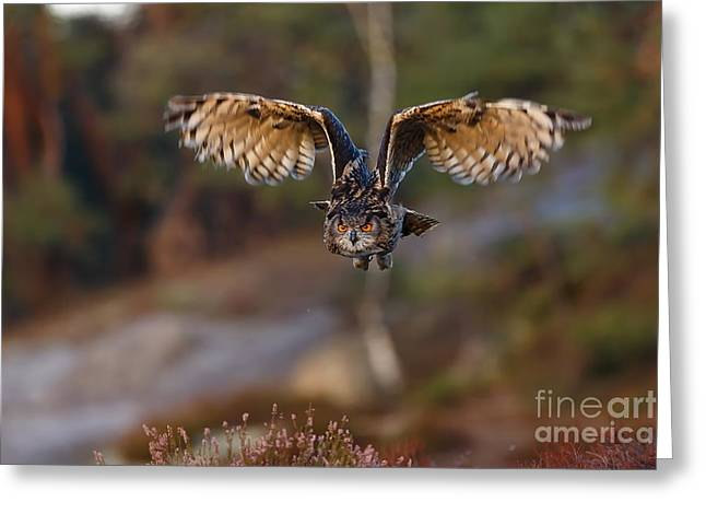Eagle Owl With Wide Open Wings Greeting Card