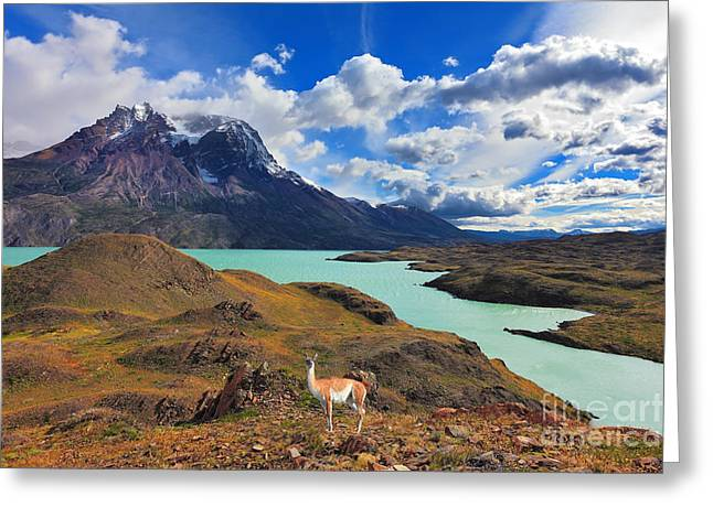 Early Autumn In Patagonia. National Greeting Card