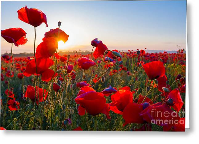 Early Morning Red Poppy Field Scene Greeting Card