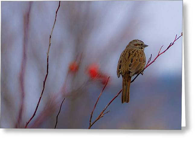 Early Spring Sparrow Greeting Card
