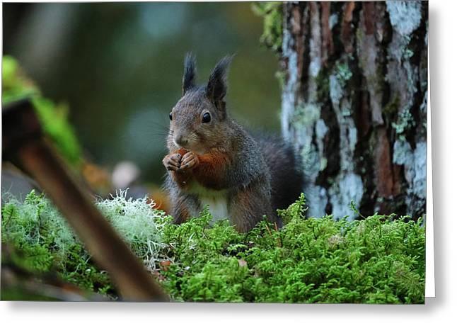 Eating Squirrel Greeting Card