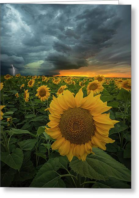 Greeting Card featuring the photograph Eccentric  by Aaron J Groen