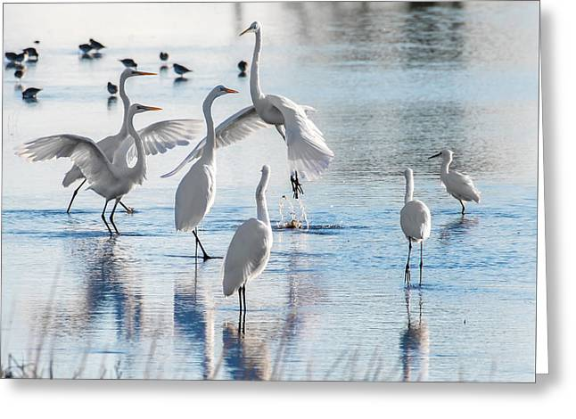 Egret Ballet 1400 Greeting Card