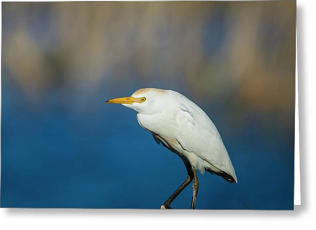 Egret On A Stick Greeting Card
