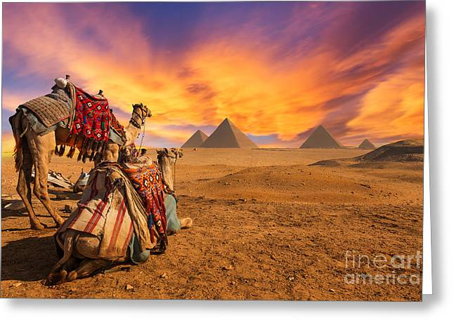 Egypt. Cairo - Giza. General View Of Greeting Card