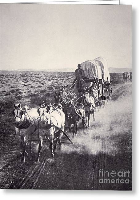 Eight Horse Heavy Freight Wagon Greeting Card