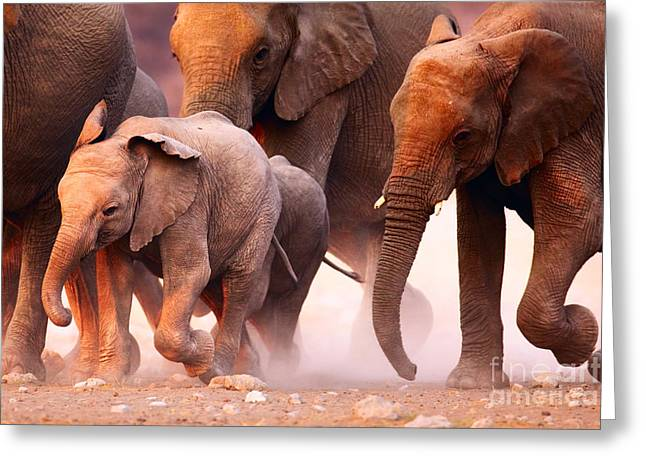 Elephant Herd On The Run In Etosha Greeting Card