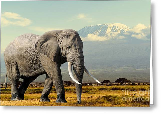 Elephant On Kilimajaro Mount Background Greeting Card