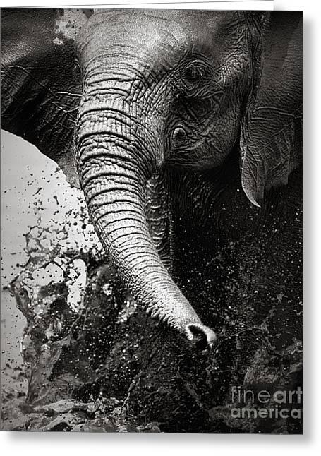 Elephant Splashing Water With Trunk - Greeting Card