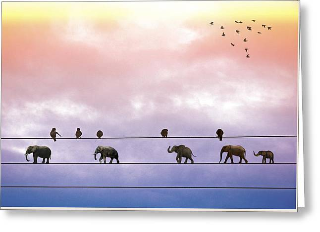 Elephants On The Wires Greeting Card