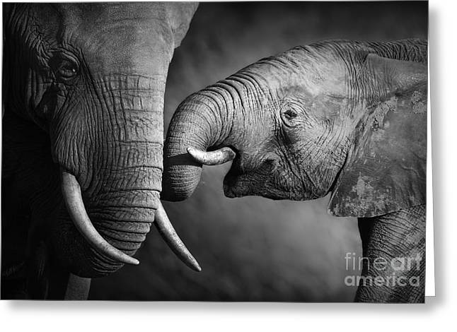 Elephants Showing Affection Artistic Greeting Card