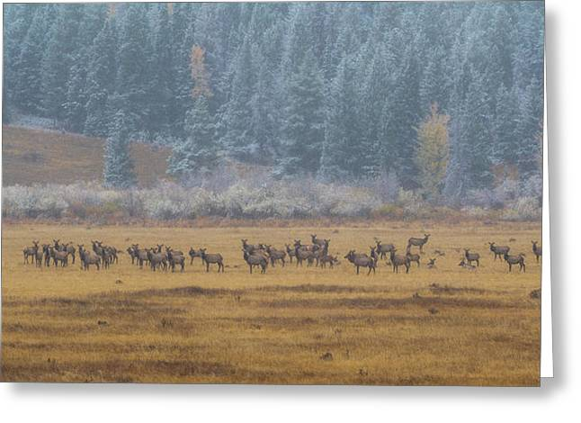 Elk On A Snowy Autumn Day Greeting Card