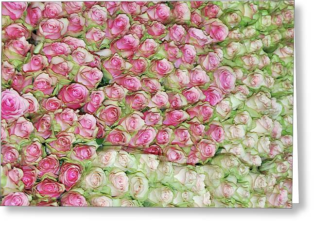 Greeting Card featuring the photograph Empress Josephine's Roses by JAMART Photography
