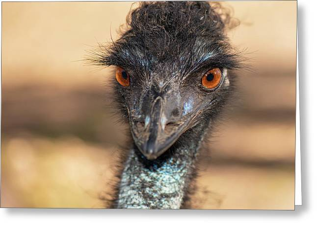 Emu By Itself Outdoors During The Daytime. Greeting Card
