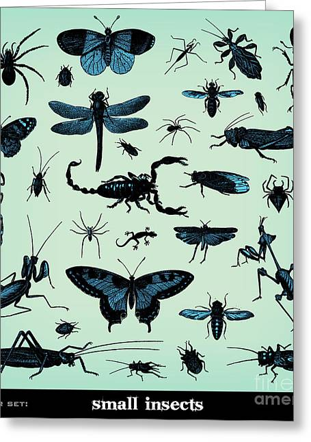 Engraving Vintage Insect Set From Greeting Card