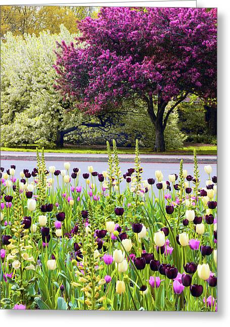 Ensconsed In Spring  Greeting Card