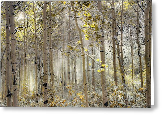 Greeting Card featuring the photograph Ethereal Autumn by Leland D Howard