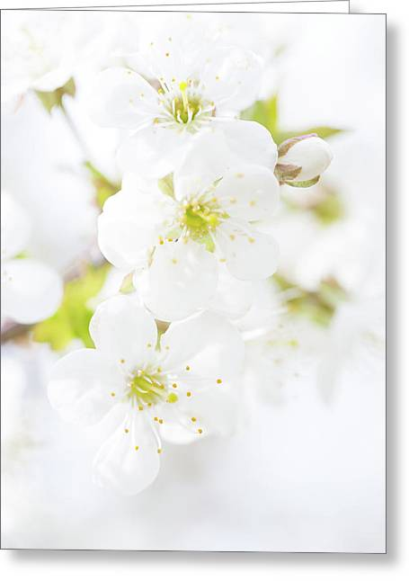 Ethereal Blossoms Greeting Card