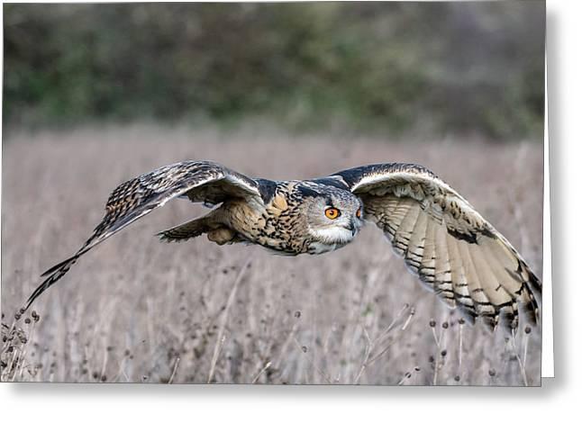 Eurasian Eagle Owl In Flight Greeting Card