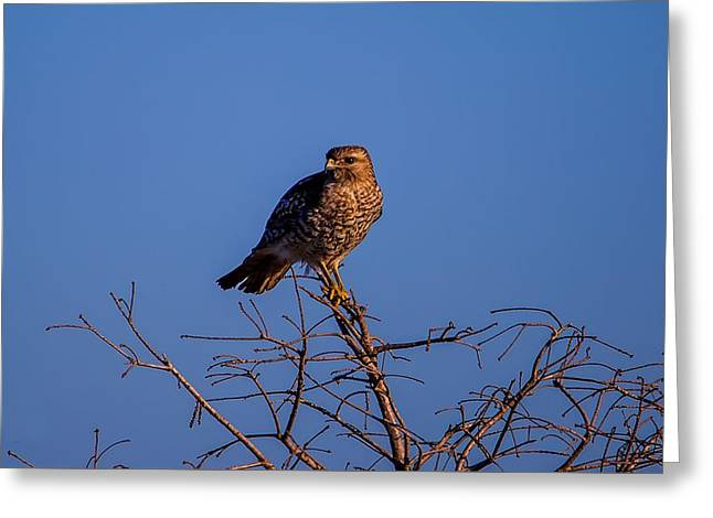 Evening Look Out Greeting Card