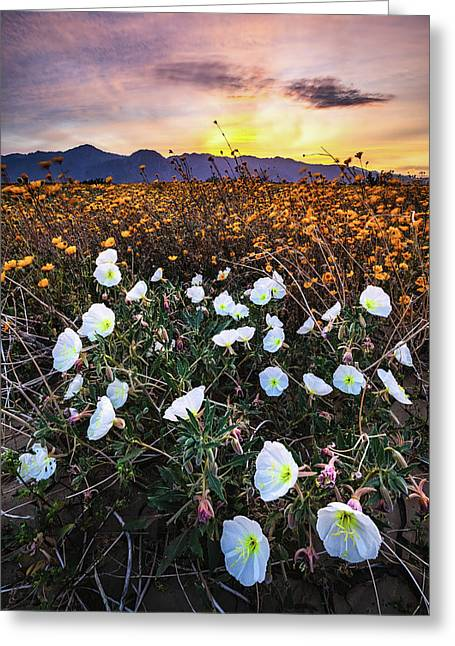 Evening With Primroses Greeting Card