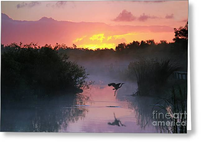 Everglades National Park At Sunrise Greeting Card