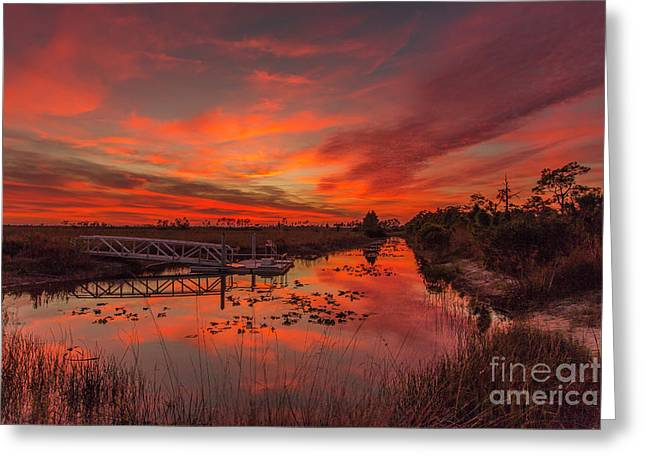Explosive Sunset At Pine Glades Greeting Card