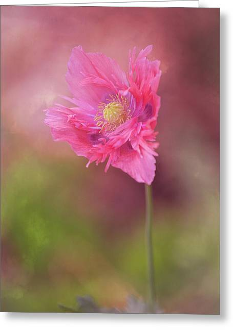 Greeting Card featuring the photograph Exquisite Appeal by Dale Kincaid