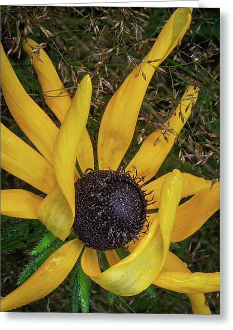 Greeting Card featuring the photograph Extraordinary by Dale Kincaid