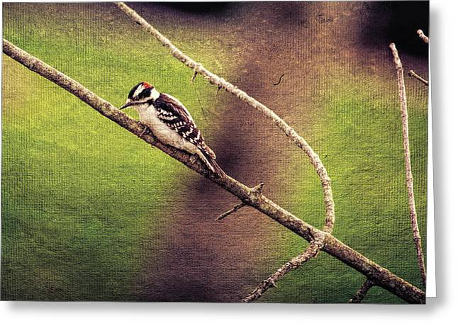 Faded Canvas Woodpecker Greeting Card