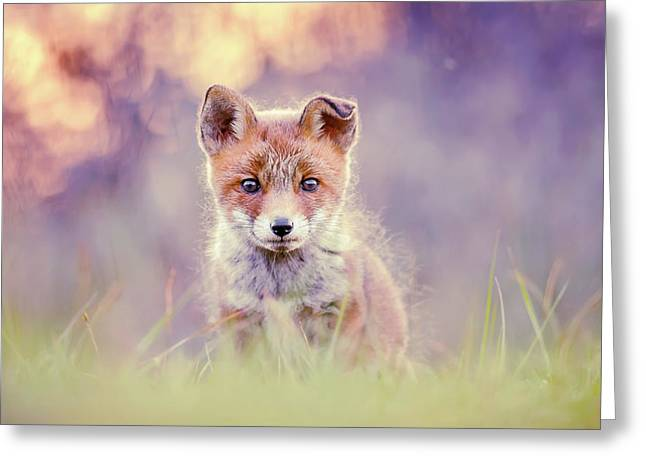 Fairytale Fox Series - Baby Fox Greeting Card
