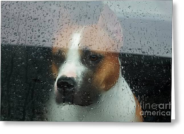 Faithful Dog Sitting In A Car And Greeting Card