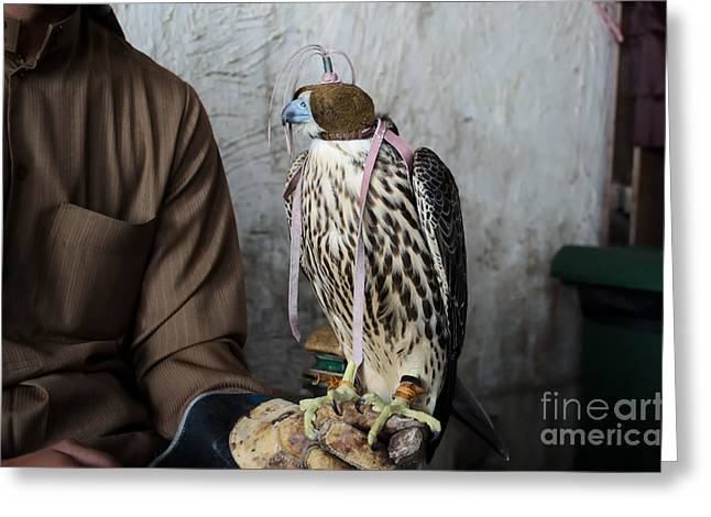 Falconer With His Falcon, Used For Greeting Card