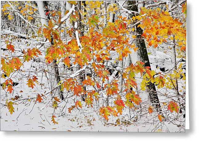 Fall And Snow Greeting Card